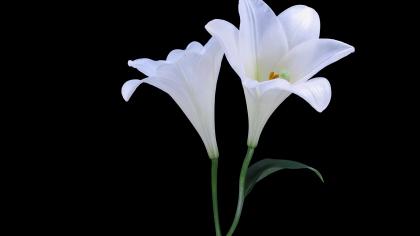 In Memory – Carlene Richardson